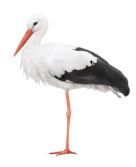 Stork on his long legs. Symbol of pregnancy.