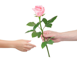 Flower as a gift. Man gives the woman a rose