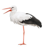 Stork on his long legs and an open beak. Symbol of pregnancy.