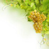 Collage of vine leaves and yellow grape