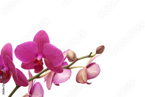 Fototapeten,aroma therapy,blühen,blühen,botanical
