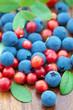 fresh wild berries