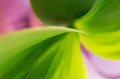 Abstract background with a green leaf closeup