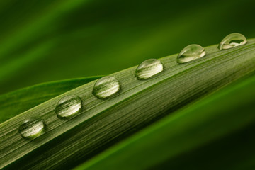 Six drops of water on a green leaf