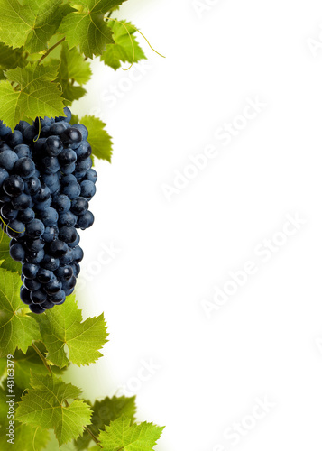 Collage of vine leaves and blue grape