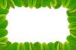 Green leaves border frame white blank