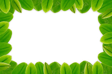 Green leaves border frame white blank