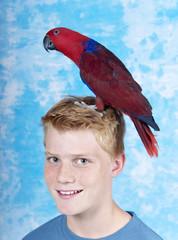 Papagei sitzt auf dem Kopf