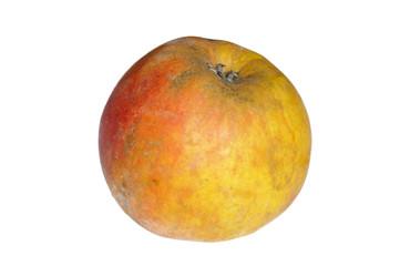 Apfel, Boskoop, Malus domestica