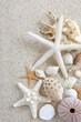 夏 砂浜 貝殻 海星 - 43177906