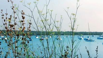 Formentera Estany des peix boats with mediterranean grass