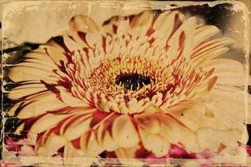 Flower Background in vintage style