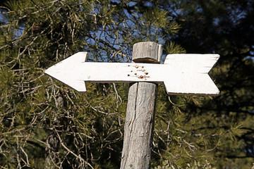 Flecha indicadora de ruta en el bosque
