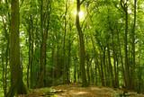 Fototapety Sonniger Sommerwald