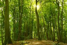 Słoneczny letni las