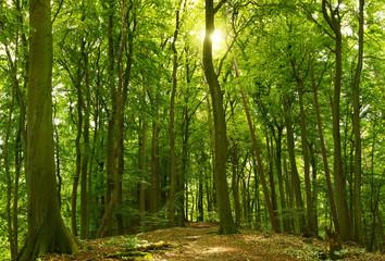 Sonniger Sommerwald