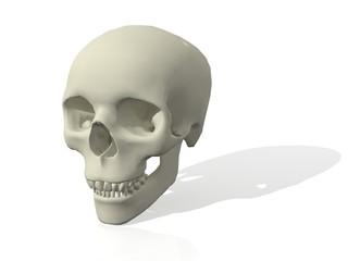 Cráneo en 3D