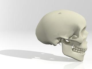 Cráneo humano en 3D