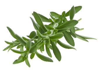 fresh stevia rebaudiana isolated on white background