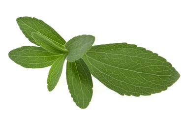 stevia rebaudiana leaf isolated on white background