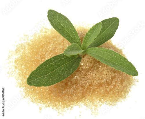 stevia rebaudiana with a sugar