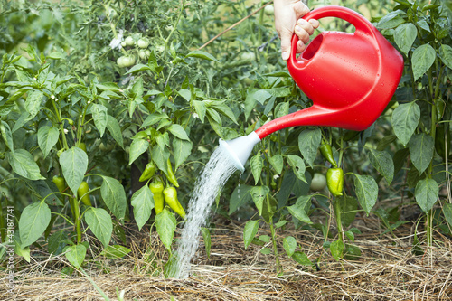 vegetable garden watering