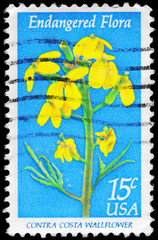 USA - CIRCA 1979 Wallflower