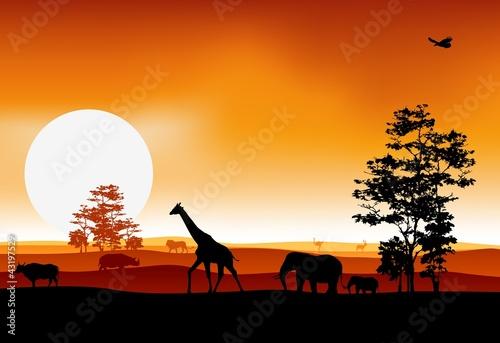 Fototapeten,akazie,afrika,tier,antilope
