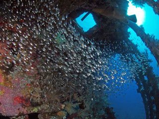 Carnatic interior and glass fish