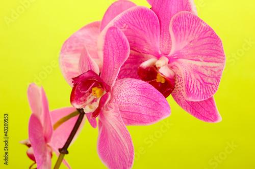 Fototapeten,blooming,orchidee,grün,hintergrund