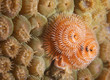 Orange and White Christmas Tree Worm