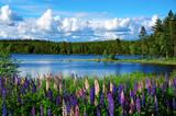 Scandinavian summer landscape - 43201536