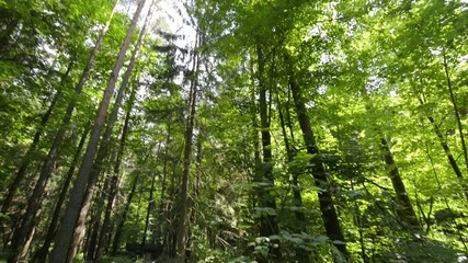 Panorama of deep forest in the summer