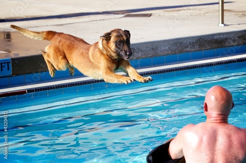 Malinois Hang Time