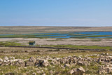 Ornithological reserve on Pag island with watching tower poster