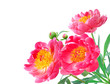Peony Flowers Bouquet over white background