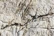 texture - pietra