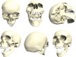 Series of human skull - in many angles.