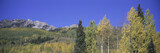 Panoramic of autumn color with mountains in background near Crested Butte Colorado