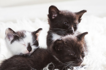 Three kittens falling asleep
