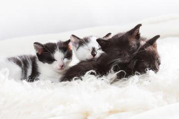 Sibling kittens taking a nap