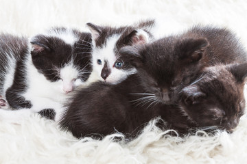 Sibling kittens gather close before taking a nap