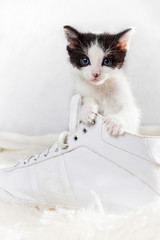Young kitten sitting in a shoe