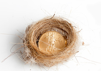 Isolated birds nest with gold coin