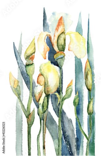 Foto op Aluminium Iris Iris flowers, watercolor illustration