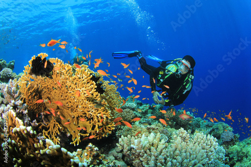 Scuba Diver explores a coral reef in the Red Sea