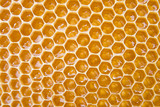 Honey in comb