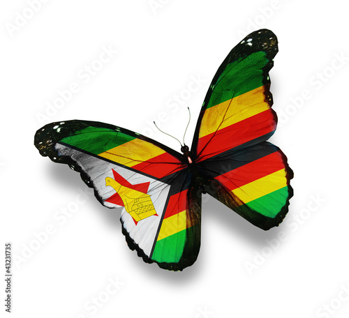Zimbabwe flag butterfly, isolated on white