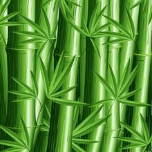 Bambù Sfondo-Bamboo Pattern Background-Vector