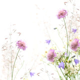 Flower frame - spring or summer background